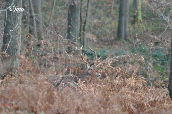 Samedi 06/12/2014. Forêt d'Halatte.