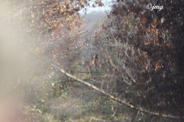 Mardi 09 décembre 2014. Forêt de Chantilly. (2)