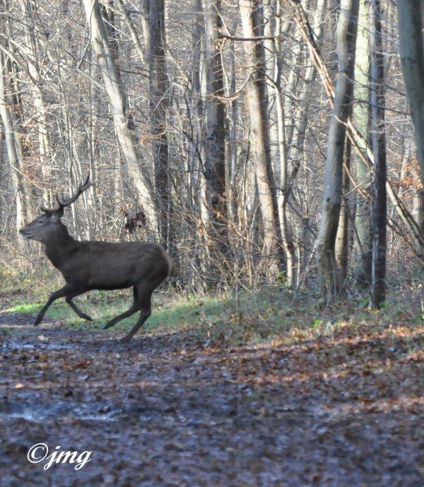 Mardi 16/12/2014. Forêt de Chantilly.