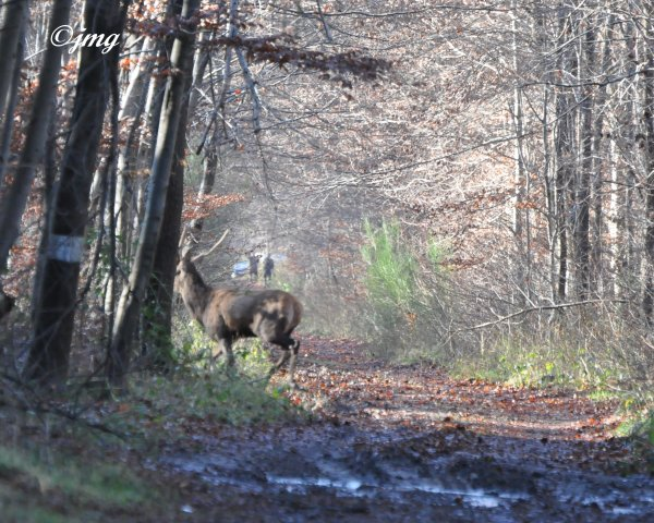 Mardi 16/12/2014. Forêt de Chantilly. (1)