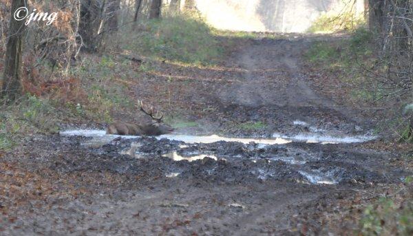 Mardi 16/12/2014. Forêt de Chantilly. (2)