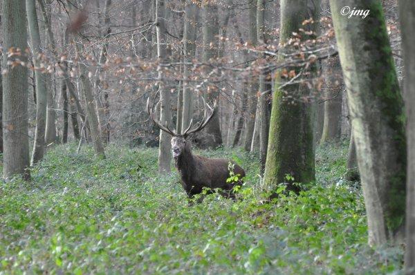 Samedi 20/12/2014. Forêt d'Halatte.