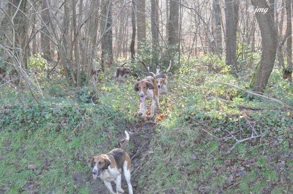 Samedi 20/12/2014.Forêt d'Halatte.. (2)
