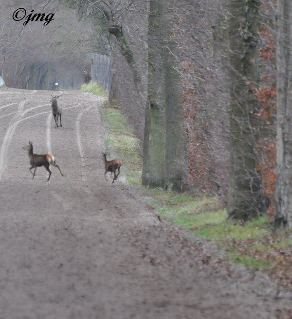 Mardi 23/12/2014. Forêt de Chantilly. (2)
