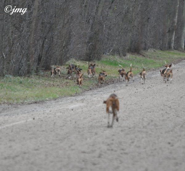 Mardi 23/12/2014. Forêt de Chantilly. (3)