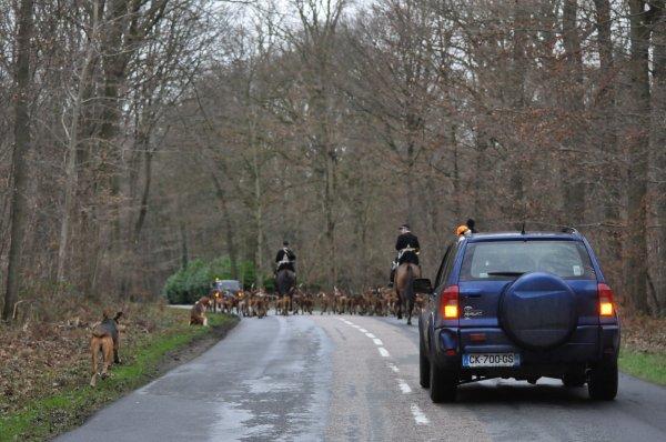 Samedi 10/01/15. Forêt d'Ermenonville.