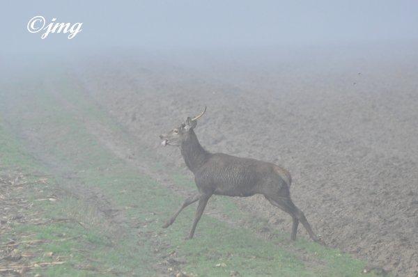Samedi 17/01/15. Forêt d'Halatte. (2)