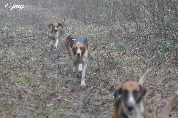 Mardi 20/01/15. Forêt de Coye la forêt.