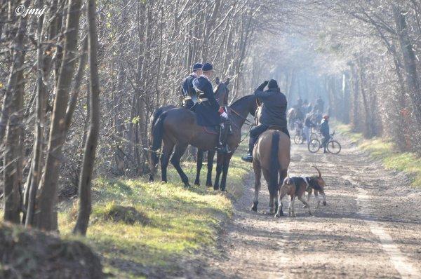 Samedi 07/02/2015. Forêt de Chantilly.(3)