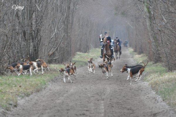 Mardi 10/02/2015. Forêt de Chantilly.(2)