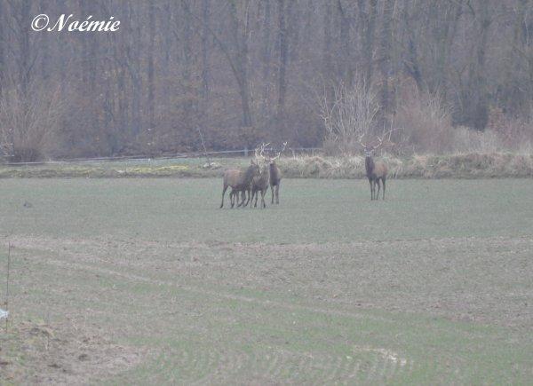 Samedi 14/02/2015. Forêt d'Halatte