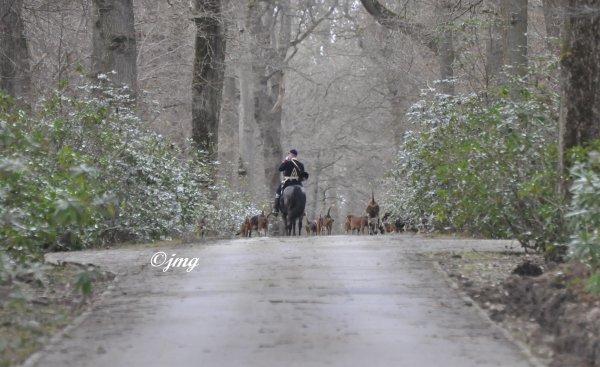 Mardi 03/03/2015. Forêt d' Ermenonville.