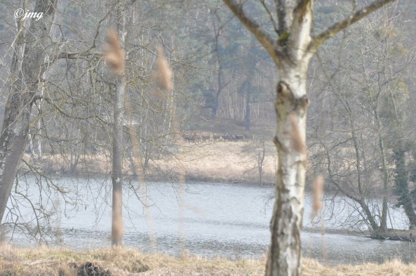 Samedi 07/03/2015. Forêt d'Ermenonville (3).