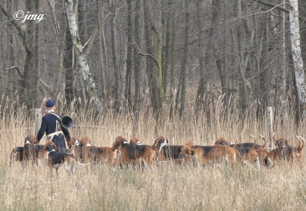 Samedi 07/03/2015. Forêt d'Ermenonville (4).