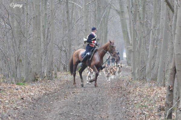 Mardi 10/03/2015. Forêt de Chantilly.