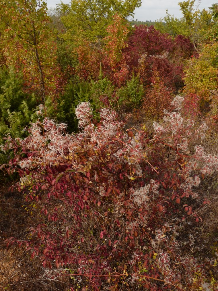 Les couleurs de l'automne - Bonne semaine - Gros bisous (Photos Pierre Paul )