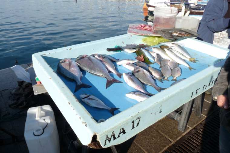 à Marseille la pêche est importante aussi ( tous les matins il y a du poisson frais et vivant )