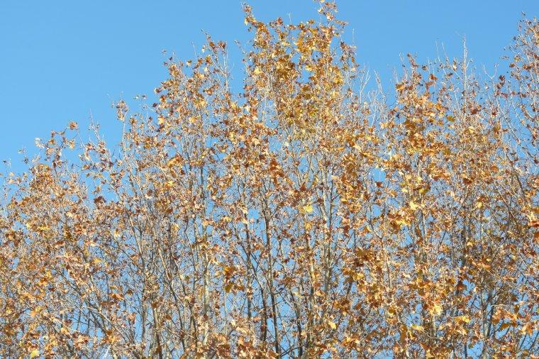 L'estaque les platanes et le ciel  le 8 décembre 2013