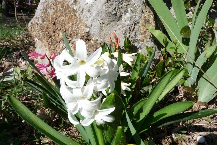 Doucement et surement le printemps arrive lentement