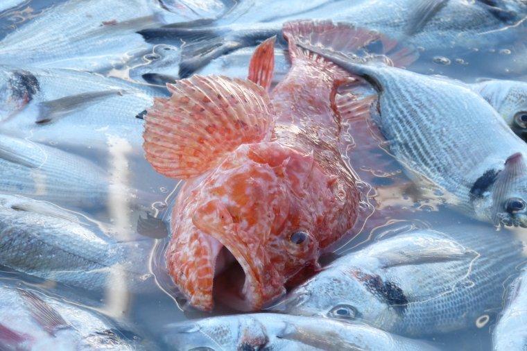 Le poisson frais c'est sur le vieux Port de Marseille - Pour ceux qui aiment le poisson