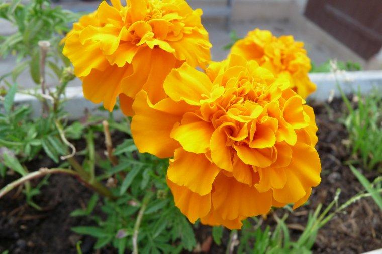 Fleurs pour vous mes amis et amies et pour ma famille  ( photos Pierre Paul )