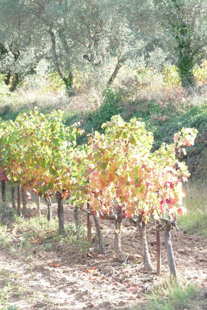 Juste en sortant de Marseille il y a le début des couleurs de l'automne
