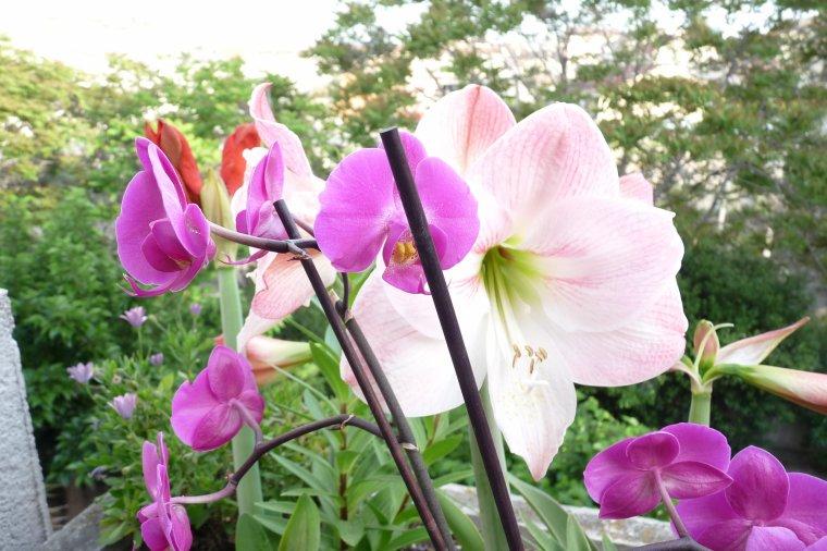 Amis et amies vous êtes tous dans mon coeur - Bon mardi et un agréable mercredi