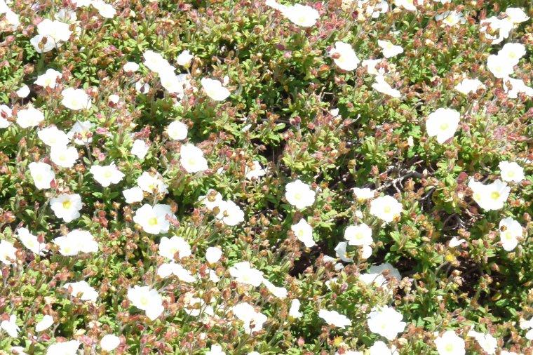 Très jolies fleurs du printemps pour rendre l'automne moins monotone