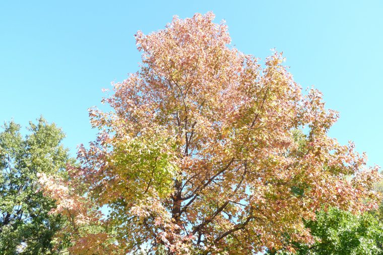 Au parc Magalone ,nous avons les couleurs de l'automne