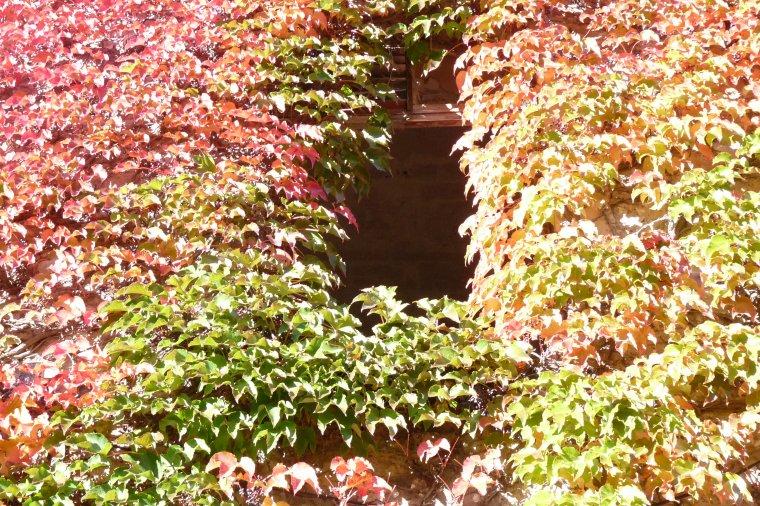 Les couleurs de l'automne ,elles nous font oublier que les jours diminuent
