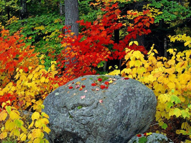 Les couleurs flamboyantes de l'automne