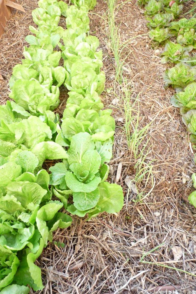 Au fort Saint Jean à Marseille il y a encore des légumes le 7 novembre