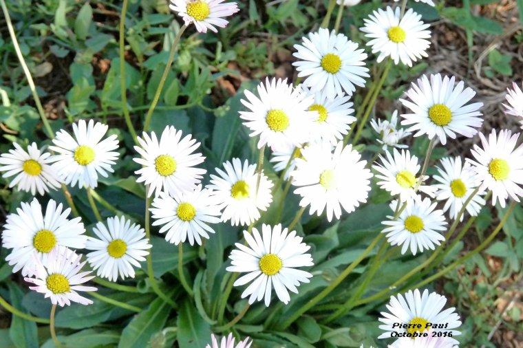 Octobre avec les fleurs
