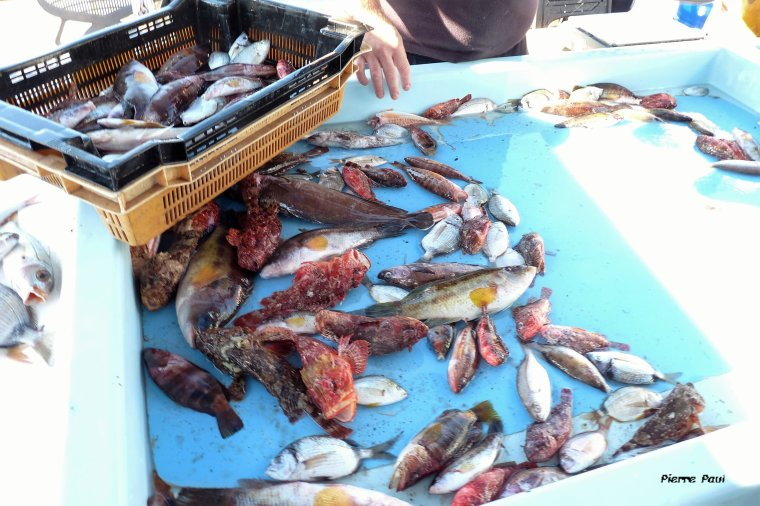 Ce matin me voilà parti  voir le marché aux  poissons sur le vieux port de Marseille