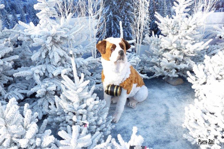 Première série de Photos pour la préparation des fêtes de Noël