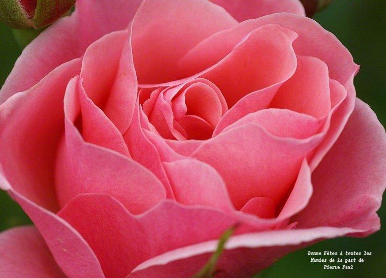 Dimanche 5 mars Bonne Fête à toute les mamies - Beaucoup de bonheur - Gros Bisous