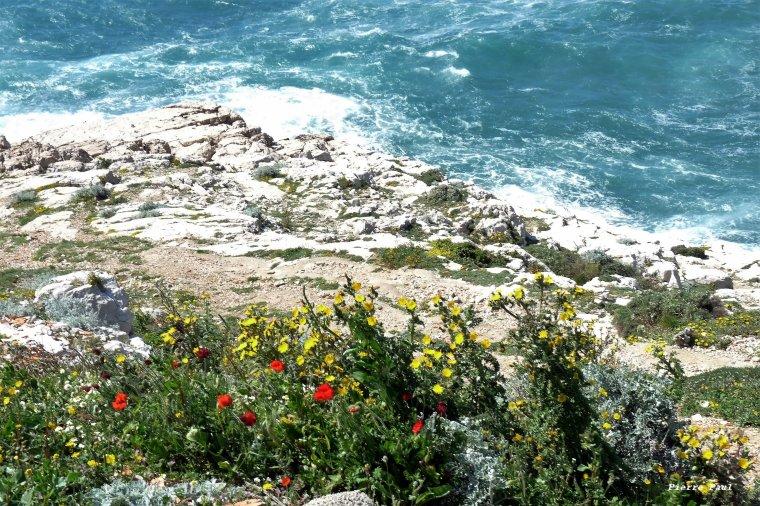 Printemps au bord de l'eau ,avant Callelongue- Marseille -