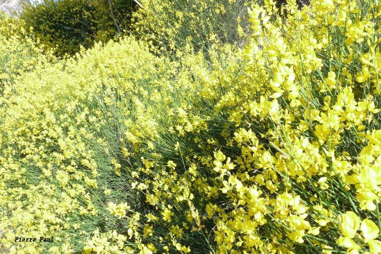 Les fleurs sauvages et les belles couleurs du printemps