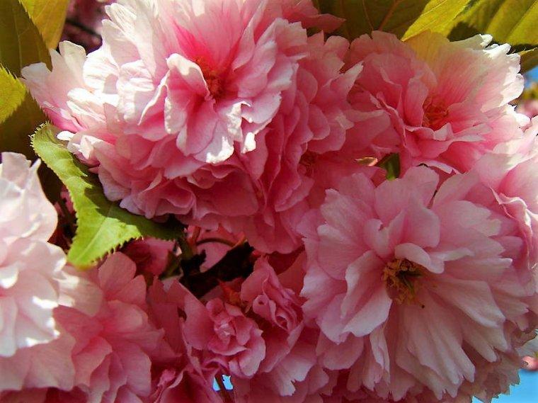 20 avril *Joyeux Anniversaire * Pour Dany * Créasdany 2013 *, beaucoup de bonheur
