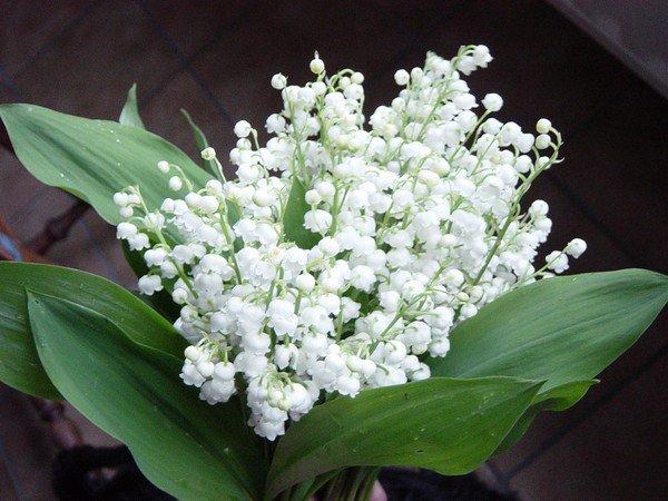 Je vous souhaite un joli mois de mai avec beaucoup de bonheur