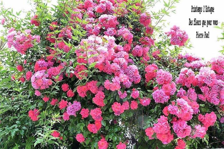 Printemps - Des fleurs que pour vous