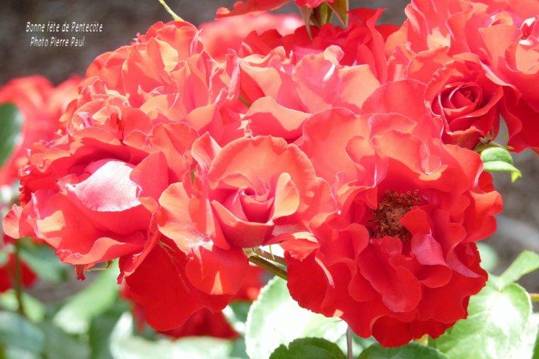 Bonne fête de Pentecôte - Paix -Amour -Santé et bonheur