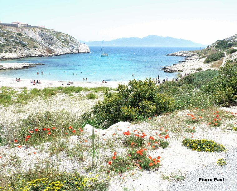 Je reviendrai avec des photos de l'île du Frioul de Marseille au mois de juin
