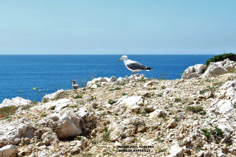 La maman surveille son bébé ( îles du Frioul à  Marseille )