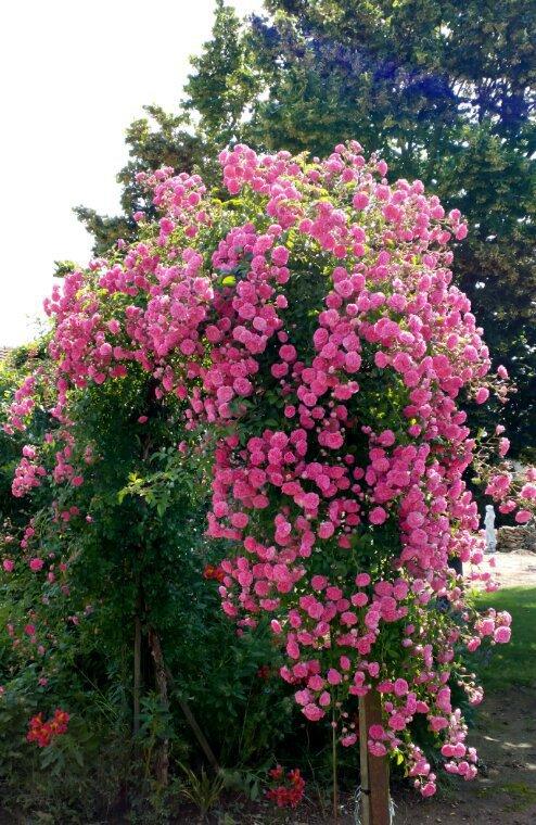 Avec des fleurs de son jardin des cadeaux de mon amie Fanfan du blog 111 Fanfan