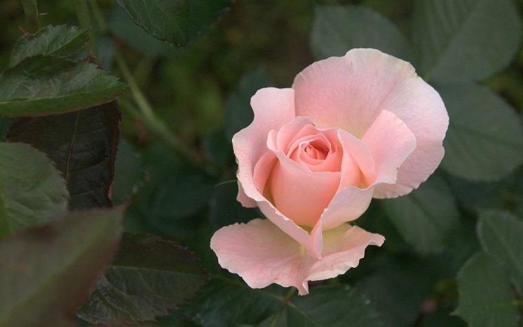 3 OCTOBRE  Joyeux anniversaire pour toi mon amie Marie Claude ( Chipie 81 )