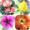 Des fleurs de mon balcon  16 05 2019  Gros bisous et bonne fin de semaine
