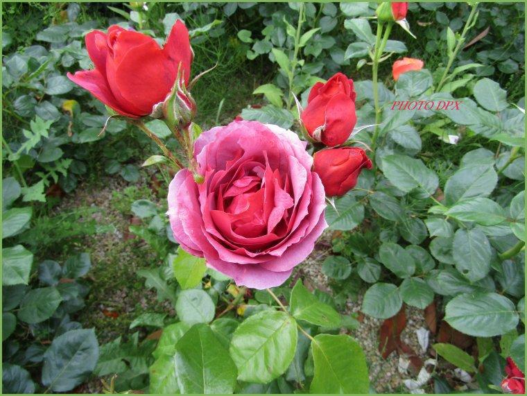 Admirables photos de mon amie Danielle du blog Nantes-Passion - Merci - Gros bisous