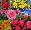 Cadeau pour vous - Avec les fleurs c'est que du bonheur - Gros bisous  de Pierre Paul !