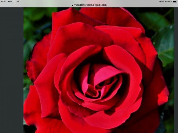 Pas de fête sans fleurs (Claudie 31 )  Gros bisous de Pierre Paul
